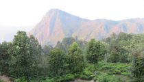Sri Lanka's tea country: the scenic train from Kandy to Ella