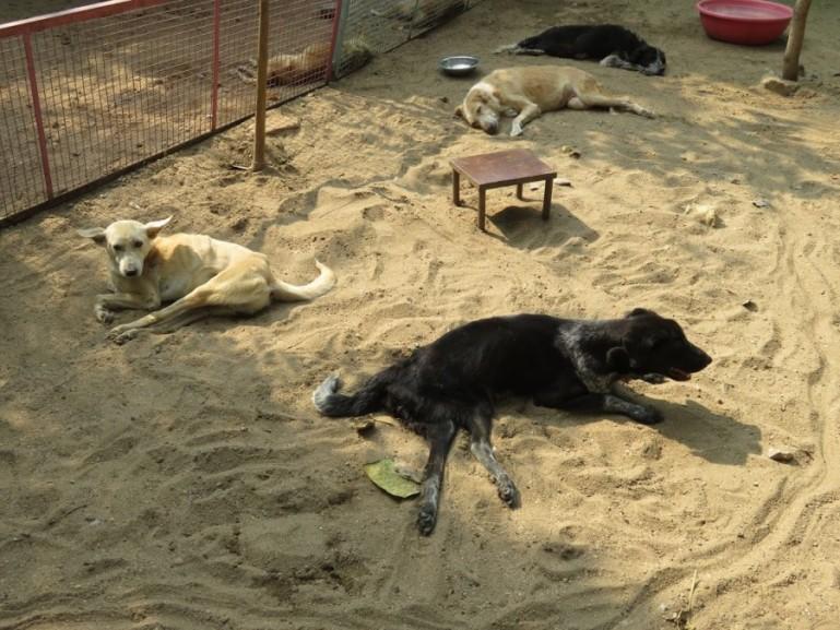 Animal Aid Unlimited Udaipur