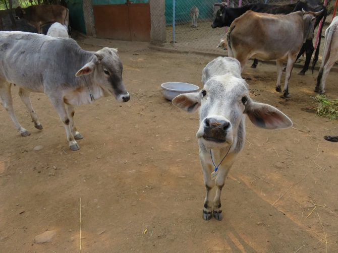 A visit to Animal Aid unlimited in Udaipur