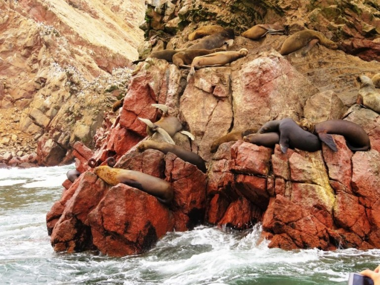 Sea lions at Islas Ballestas in Ica Peru