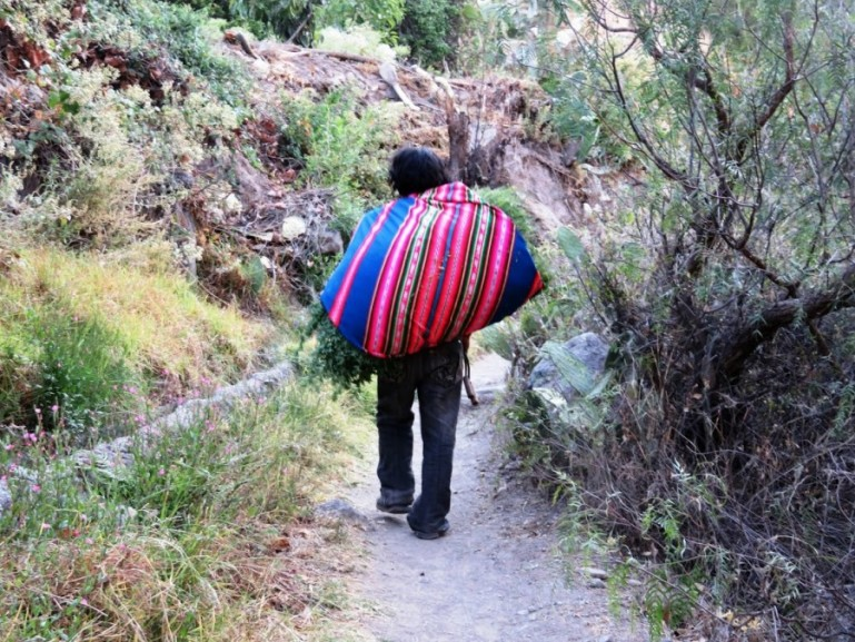 A man carrying grass in San Juan de Chollo, one of the villages you come across on your Colca Canyon trek