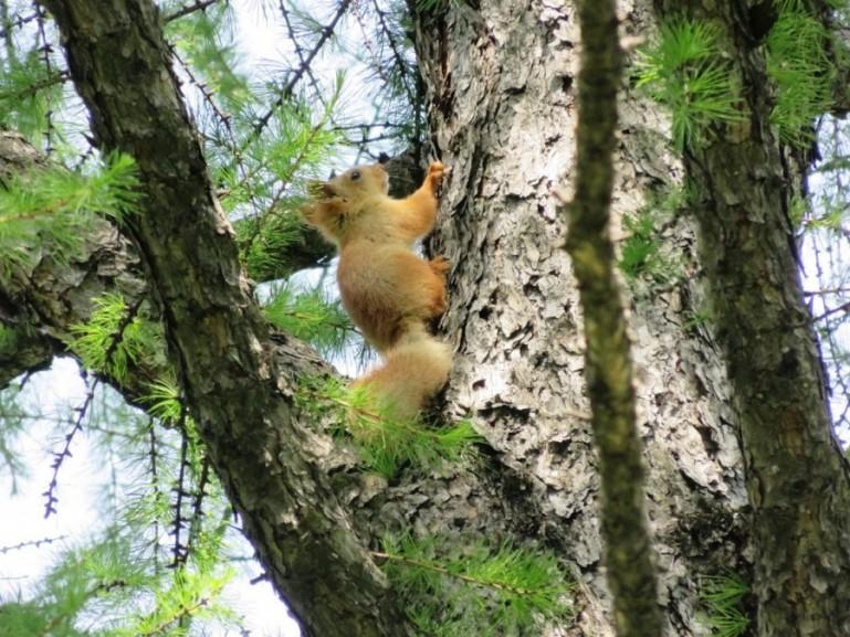 Squirrel in Botanical garden in Almaty