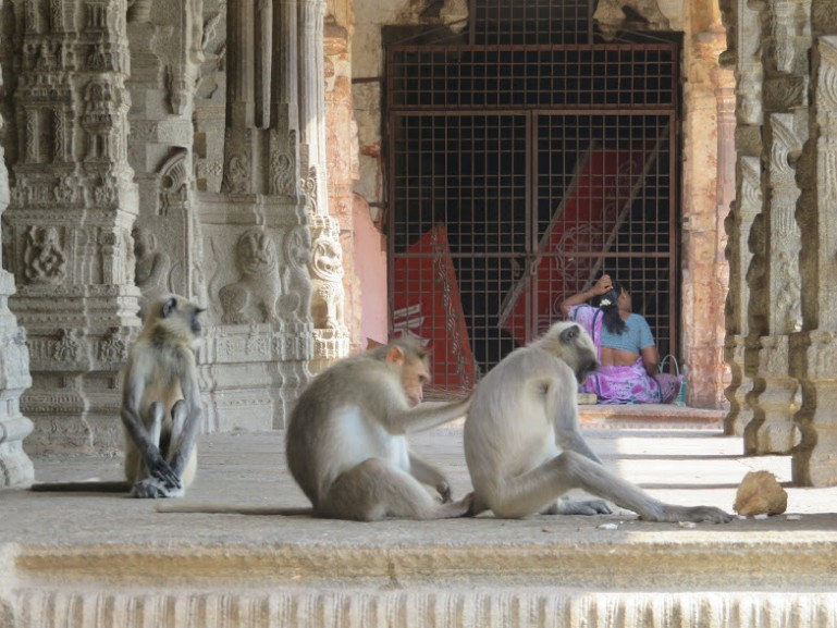 Virupaksha temple is the most popular place to visit in Hampi for local tourists