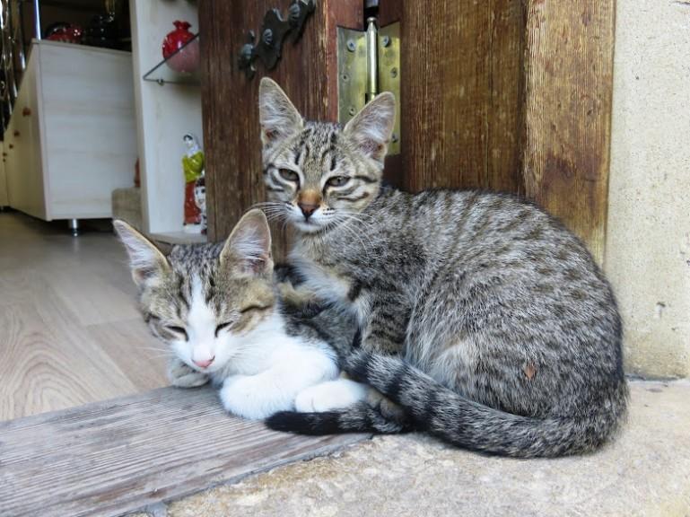 Cats in Baku