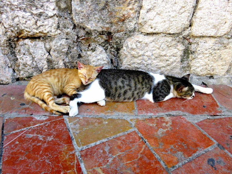 Backpacking Montenegro:cats in Kotor