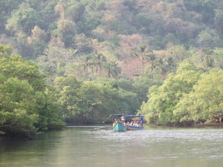 Things to do in Palolem: Jungles and wildlife in Goa