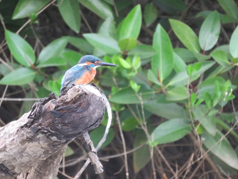 Birdwatching in Palolem Goa