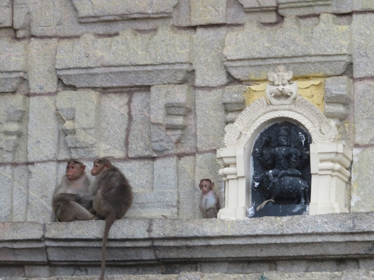monkeys at chamundi hill