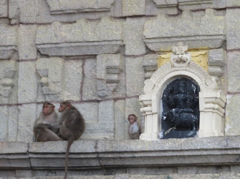 monkeys at chamundi hill