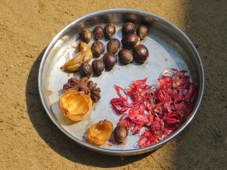 Nutmeg and other spices at Munroe Island in Kerala