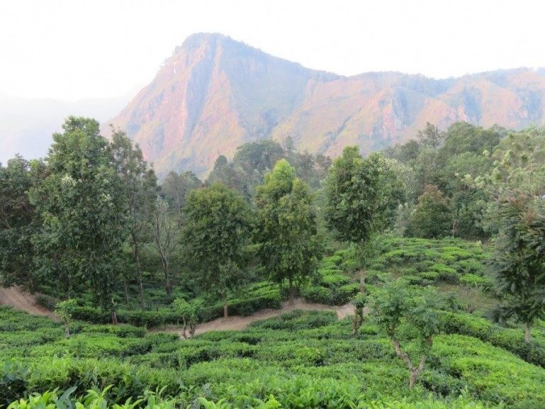The Kandy to Ella train: a guide to Sri Lanka's tea country