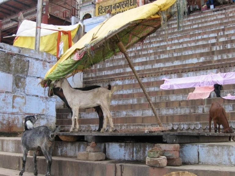 Kedar ghat in Varanasi