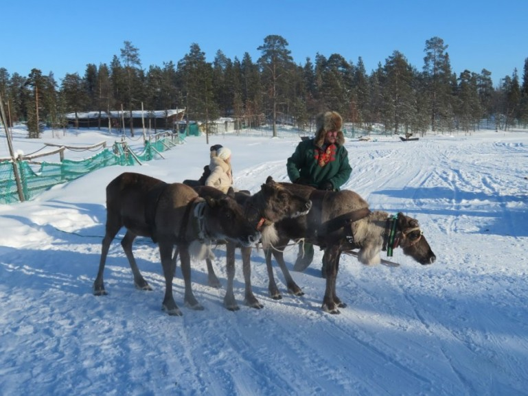 Lapland is home to the Sami people and their reindeers