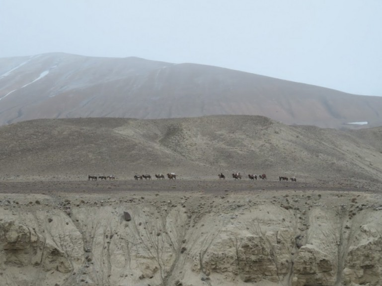 Camel caravan on the Pamir highway Tajikistan