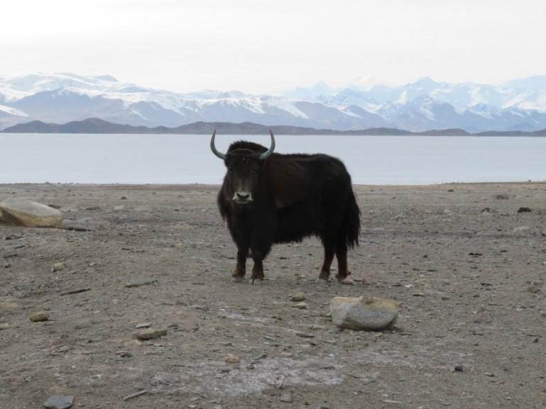 Lake Karakul Tajikistan