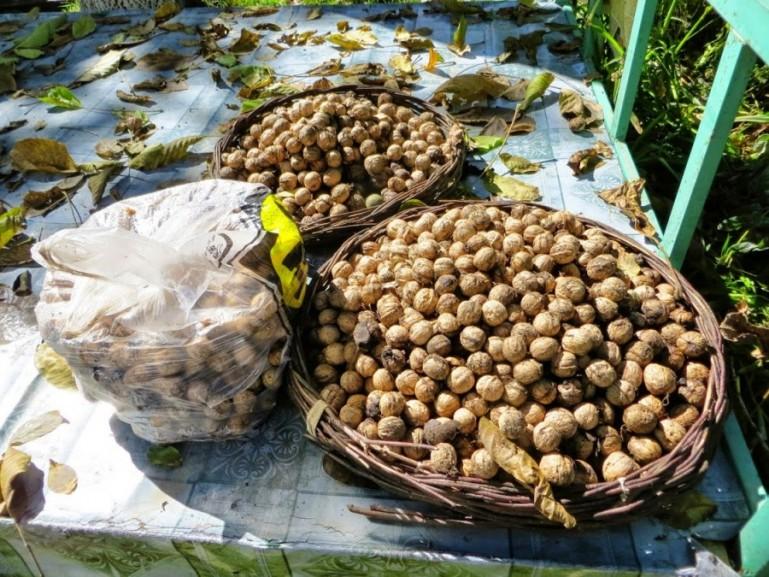 Walnuts in Arslanbob Kyrgyzstan