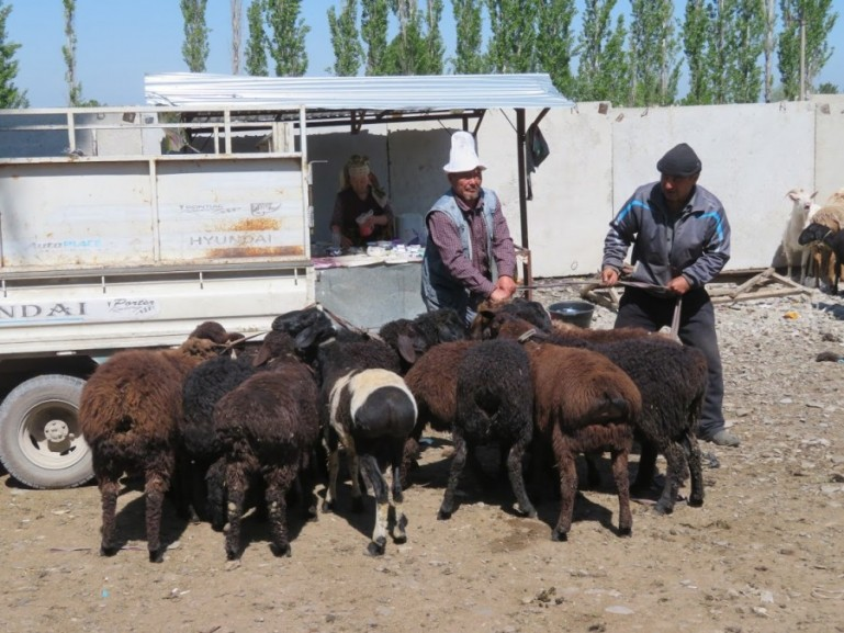 Animal bazaar in Osh Kyrgyzstan