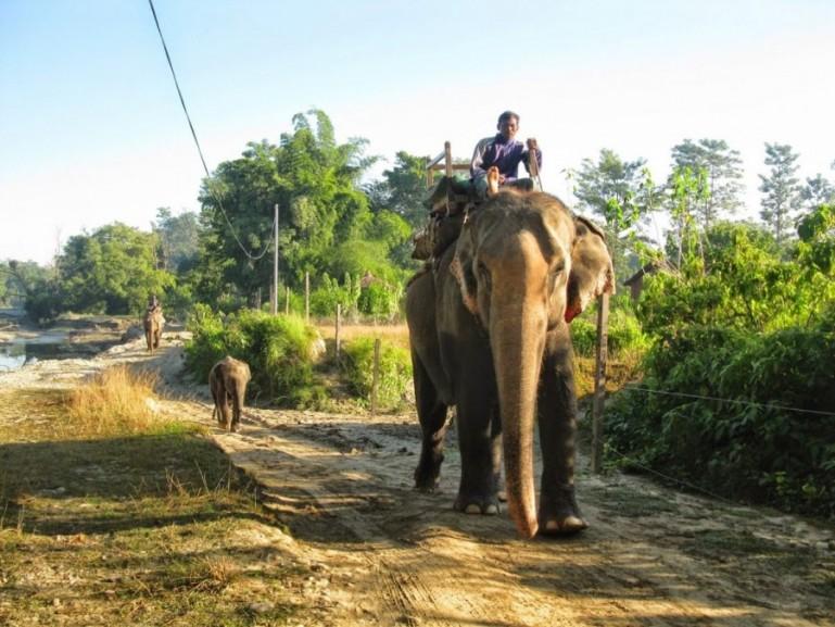 Elephant breeding center in Bardiya National Park