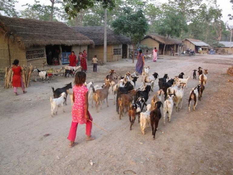 Tharu village in Bardiya