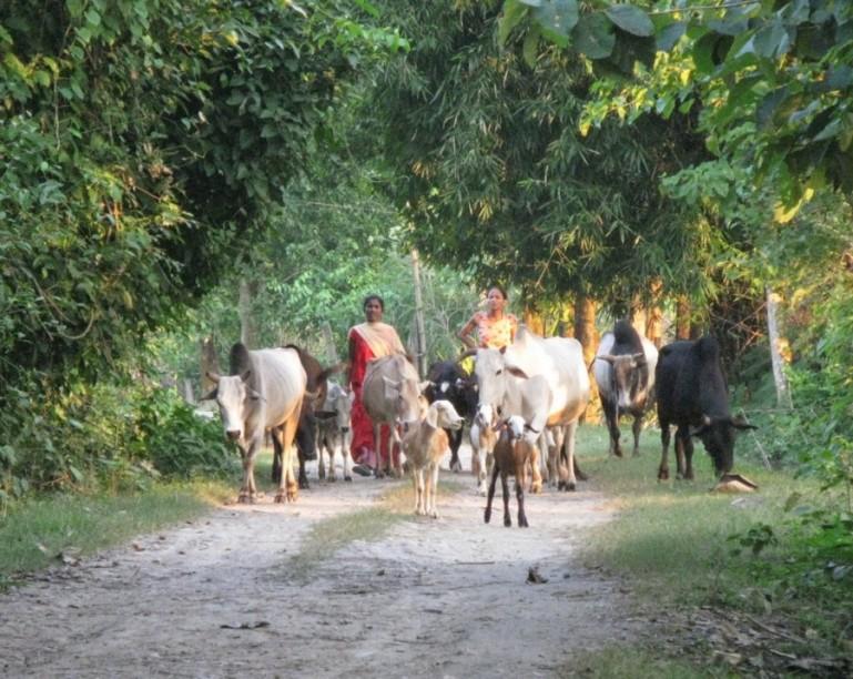 Tharu villages near Bardiya National Park