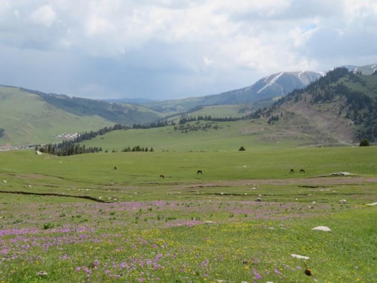 Wild flowers in Jyrgalan Kyrgyzstan
