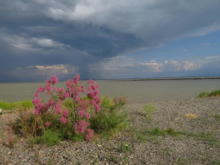 Shore of lake Kapchagay in Altyn Emel National park