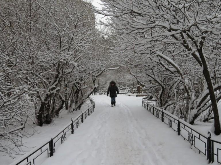 Winter sceneries in a park in St Petersburg in winter