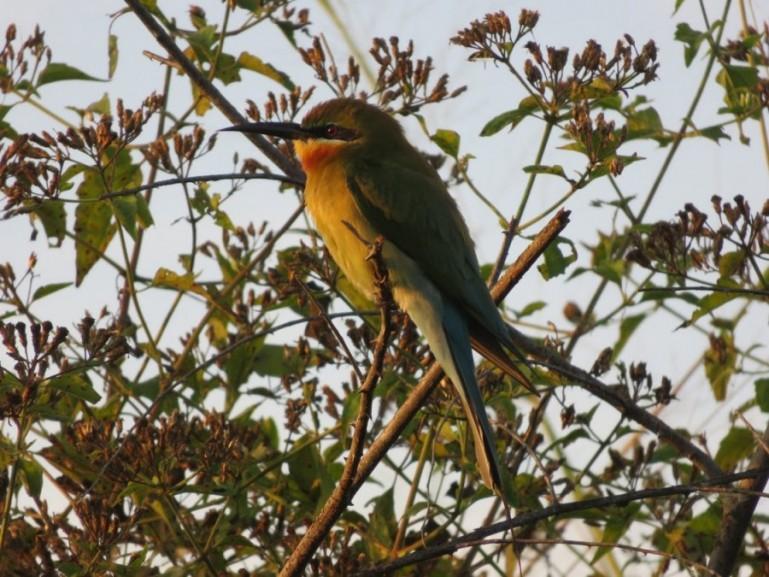 bird in Udawalawe national park in Sri Lanka