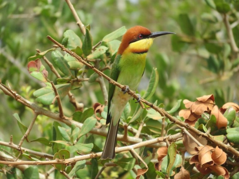 Bird in Yala national park in Sri Lanka