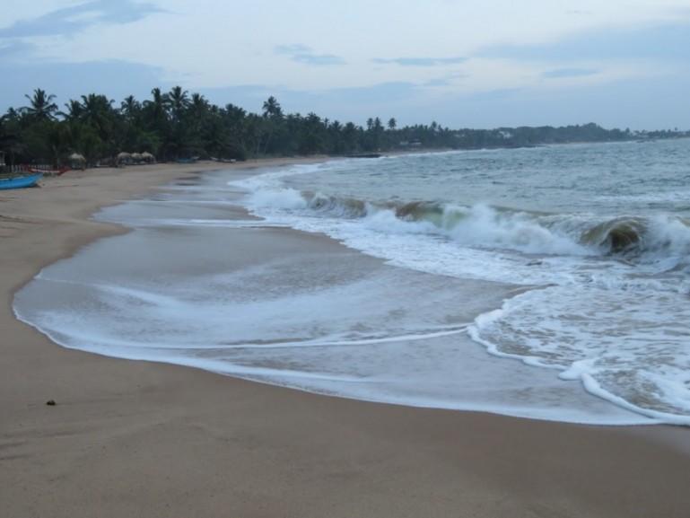 fish at Mirissa beach on the Southern coast of Sri Lanka