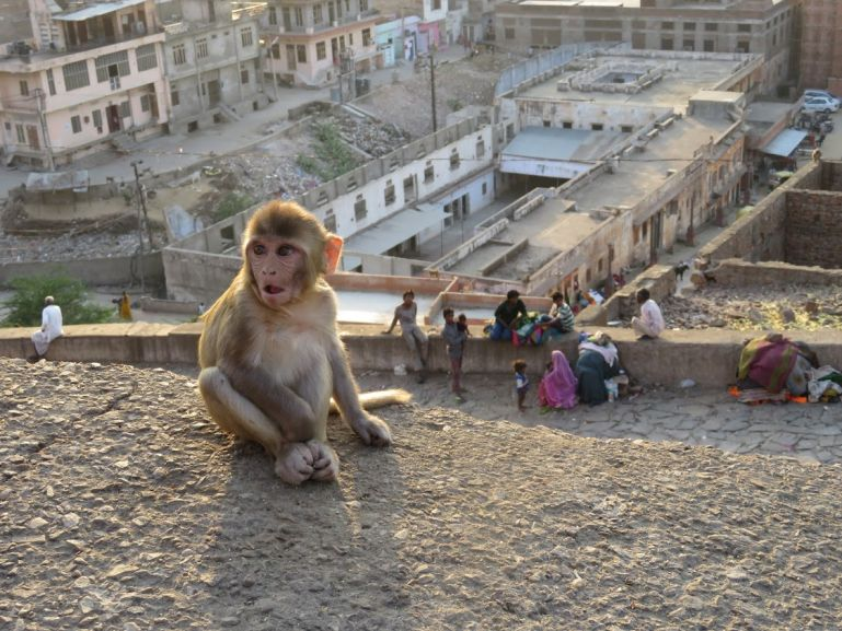 Galw bagh monkey temple