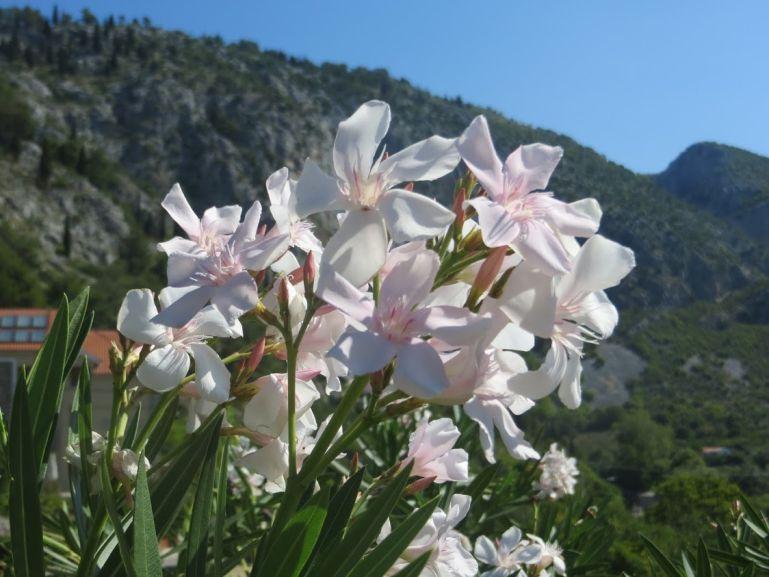 Scenery from Mostar to Blagaj