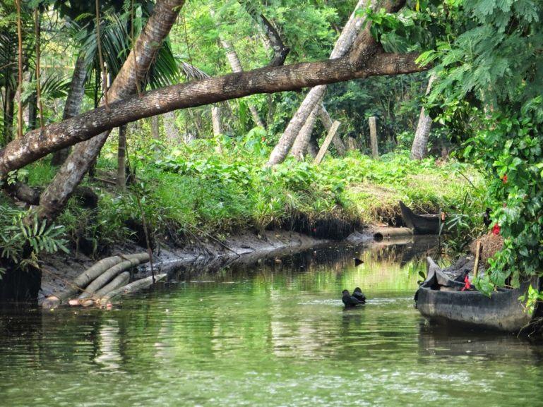 The backwaters near Kochi