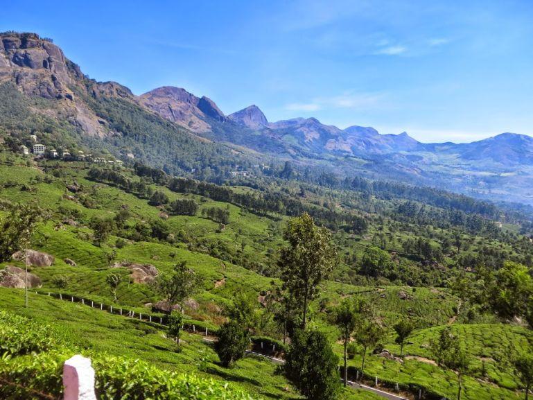 Cardamom hills in Munnar Kerala