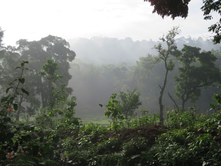 Forests of BR Hills in Karnataka, India