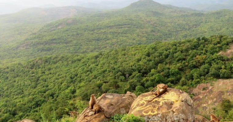 BR Hills: a travel guide to Biligiri Rangana Betta