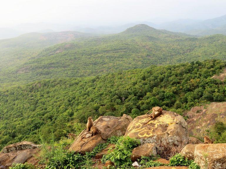 BR Hills in Karnataka, India