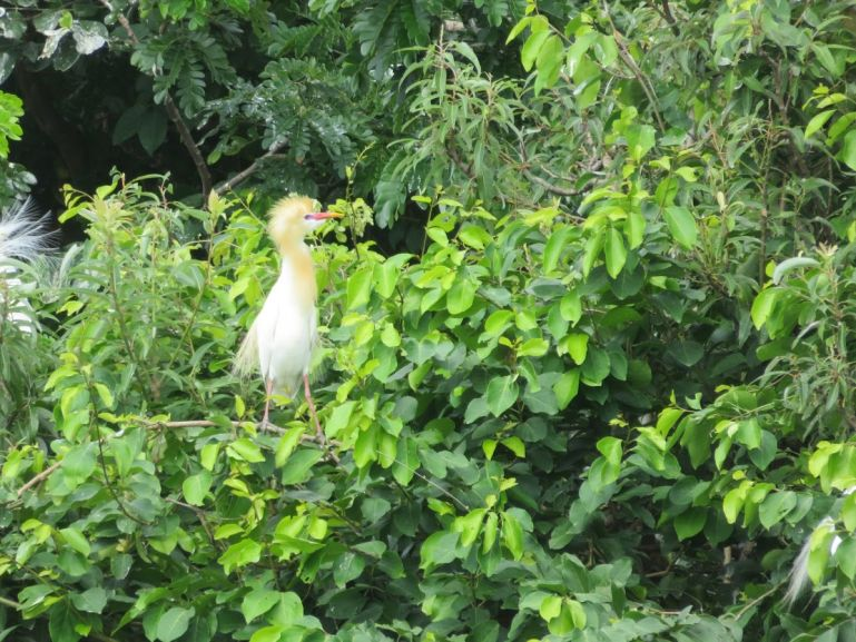 Ranganathittu bird sanctuary Karnataka
