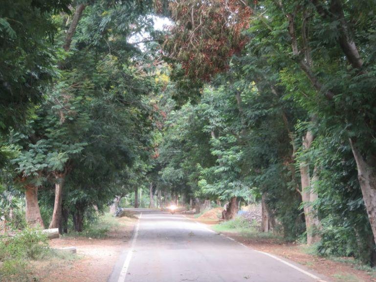 Road to BR Hills in Karnataka, India