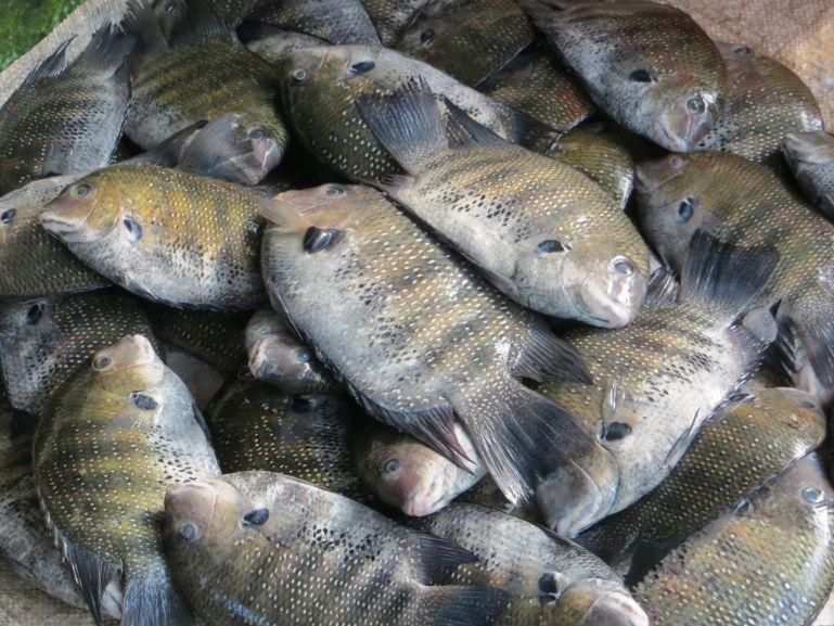Fish market in Fort Kochi in Kerala