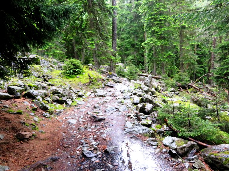 Forest trail to Chalaadi glacier