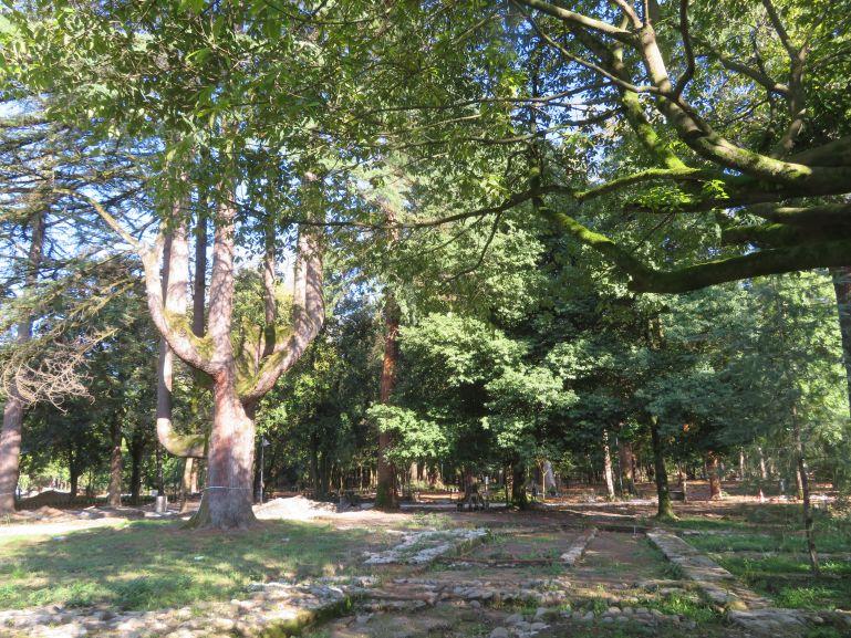 Botanical garden in Zugdidi Georgia
